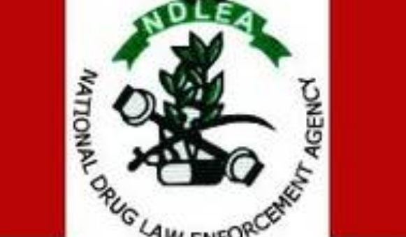 My Logo: NDLEA Recruitment 2020
